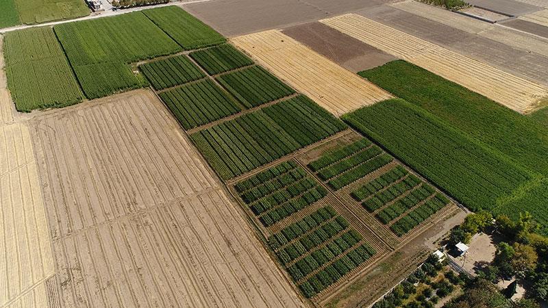 مزارع تحقیقی