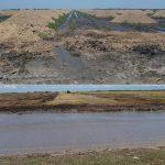 اهمیت مواد آلی خاک در کشت ذرت